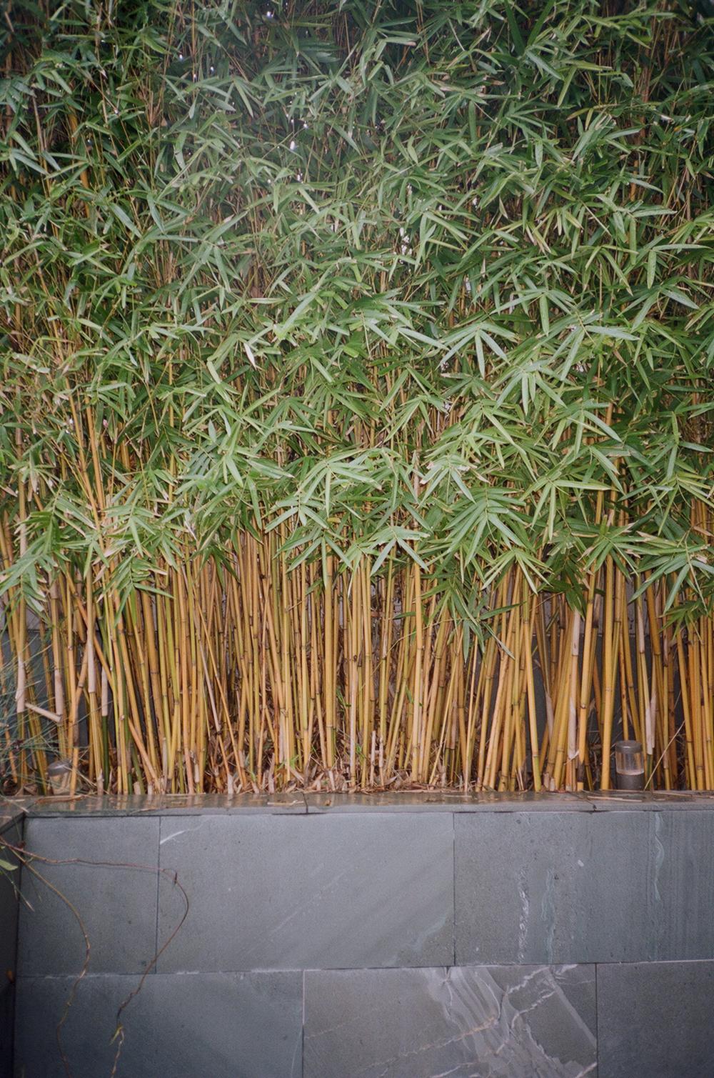 Bamboo Wall Paper