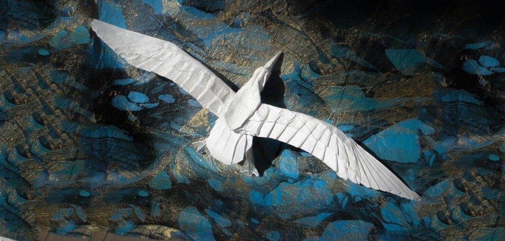 c-Albatross-1-1024x489.jpg
