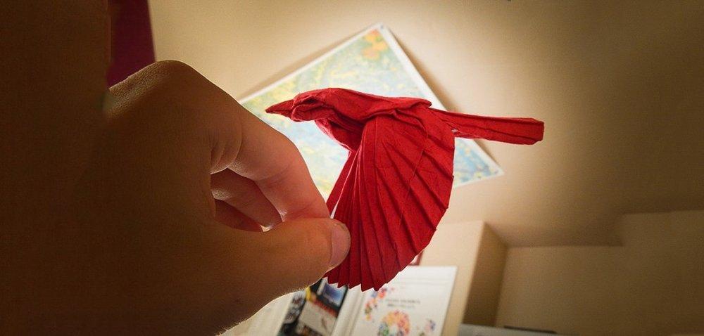 c-origami-Red-Bird-1-1024x489.jpg
