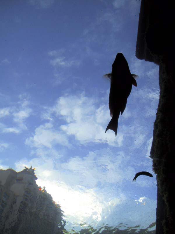 atlatisSkyFish.jpg