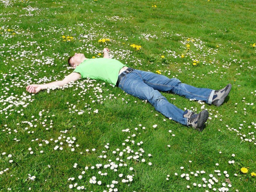 bloom-carefree-cozy-258330.jpg