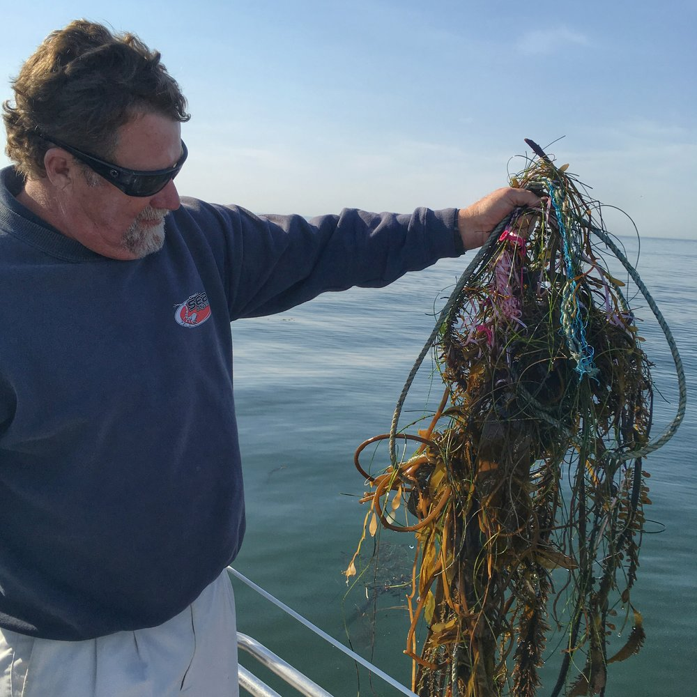 OSO Captain, Tim O'Neill, hoists drift-kelp from Monterey Bay entangled in boat line and balloon ribbon. (Photo: Colin Carney)