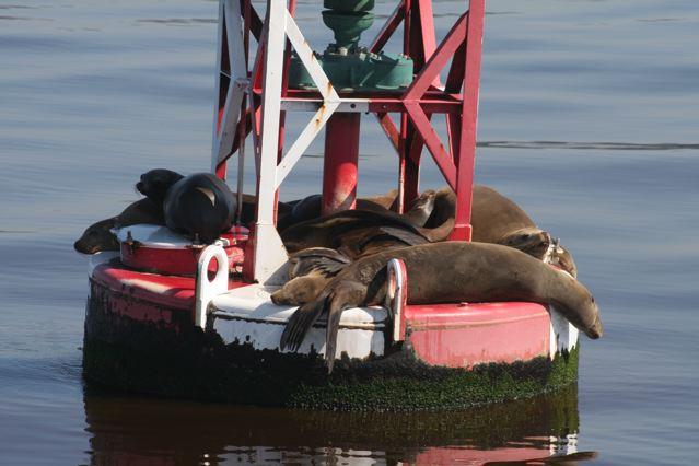 Sea lions 3.jpg
