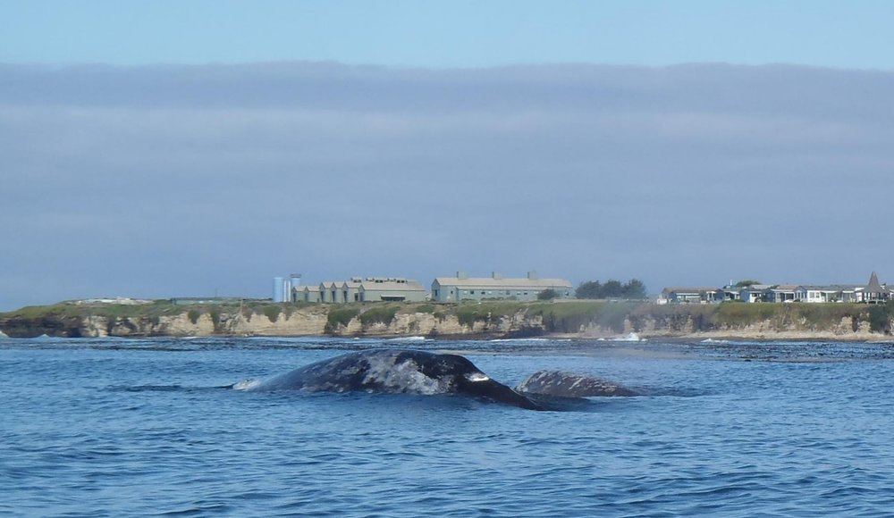 whales051515_05-1 (2).jpg