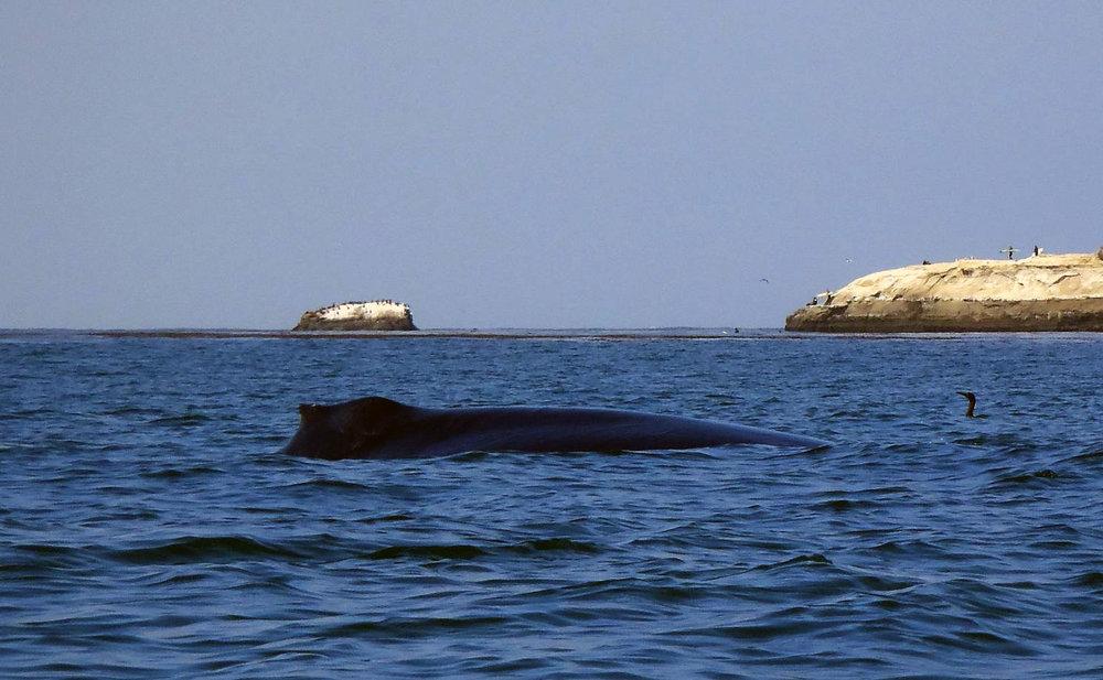 whale062918_01.jpg