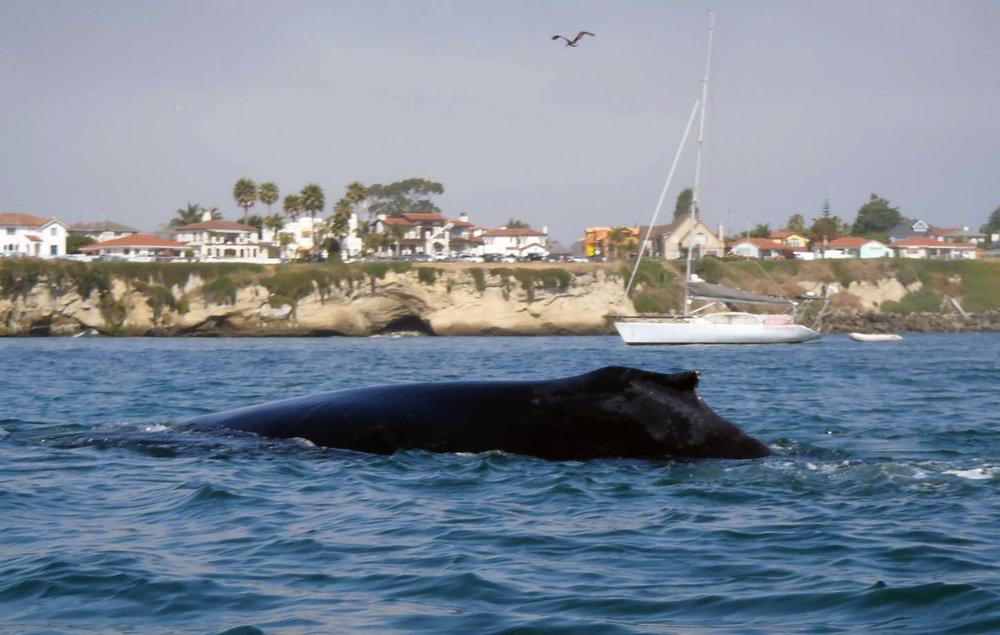 whale062918_04.jpg