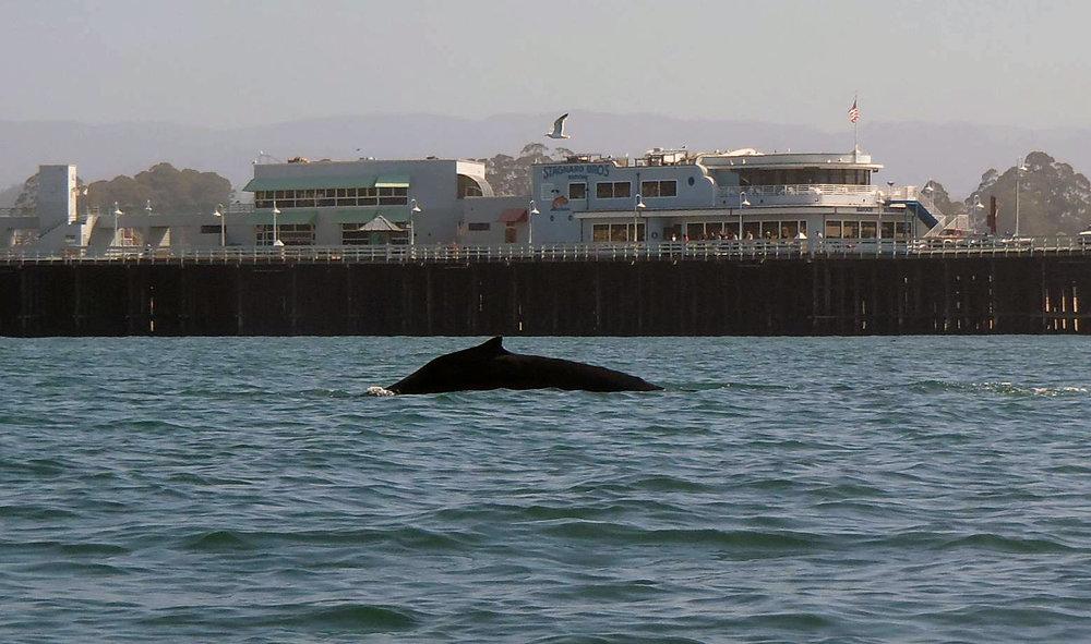whale062918_06.jpg