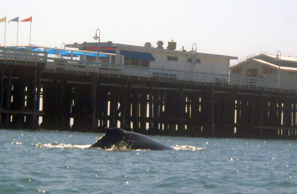 whale062918_09.jpg