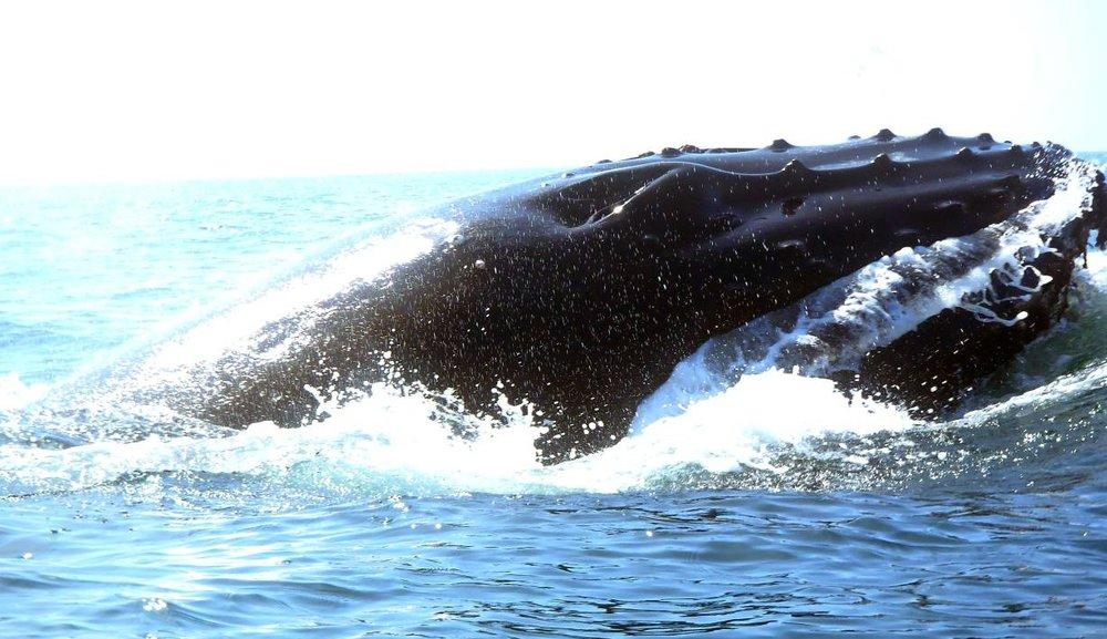 whale062918_08.jpg