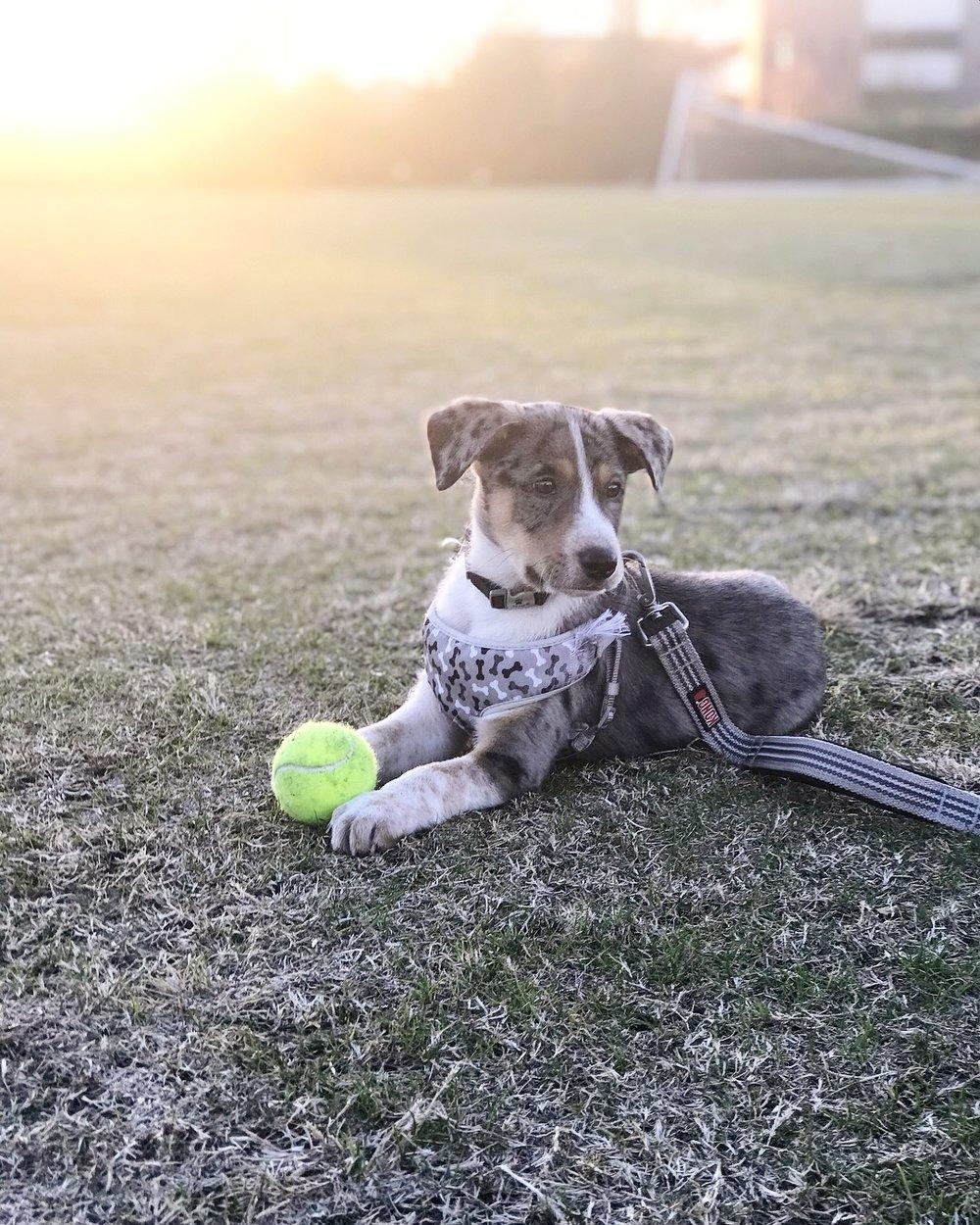 dog puppy photo