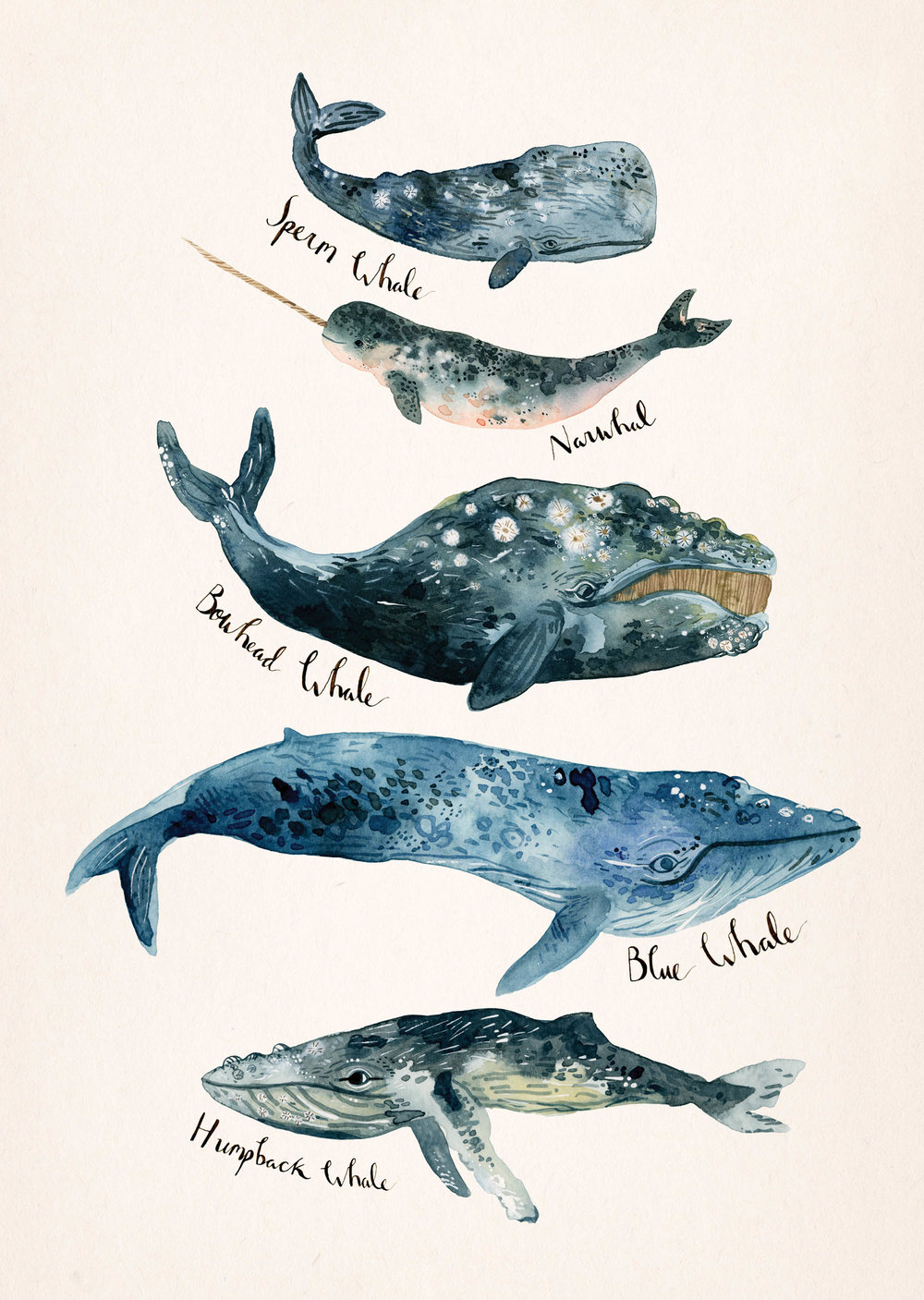 whale-species-watercolour.jpg