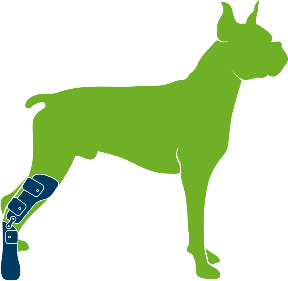 Dog wearing custom hindlimb prosthesis