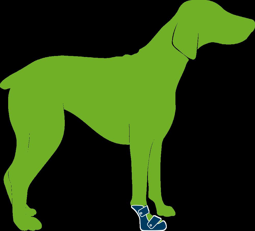 Dog wearing custom subcarpal orthosis
