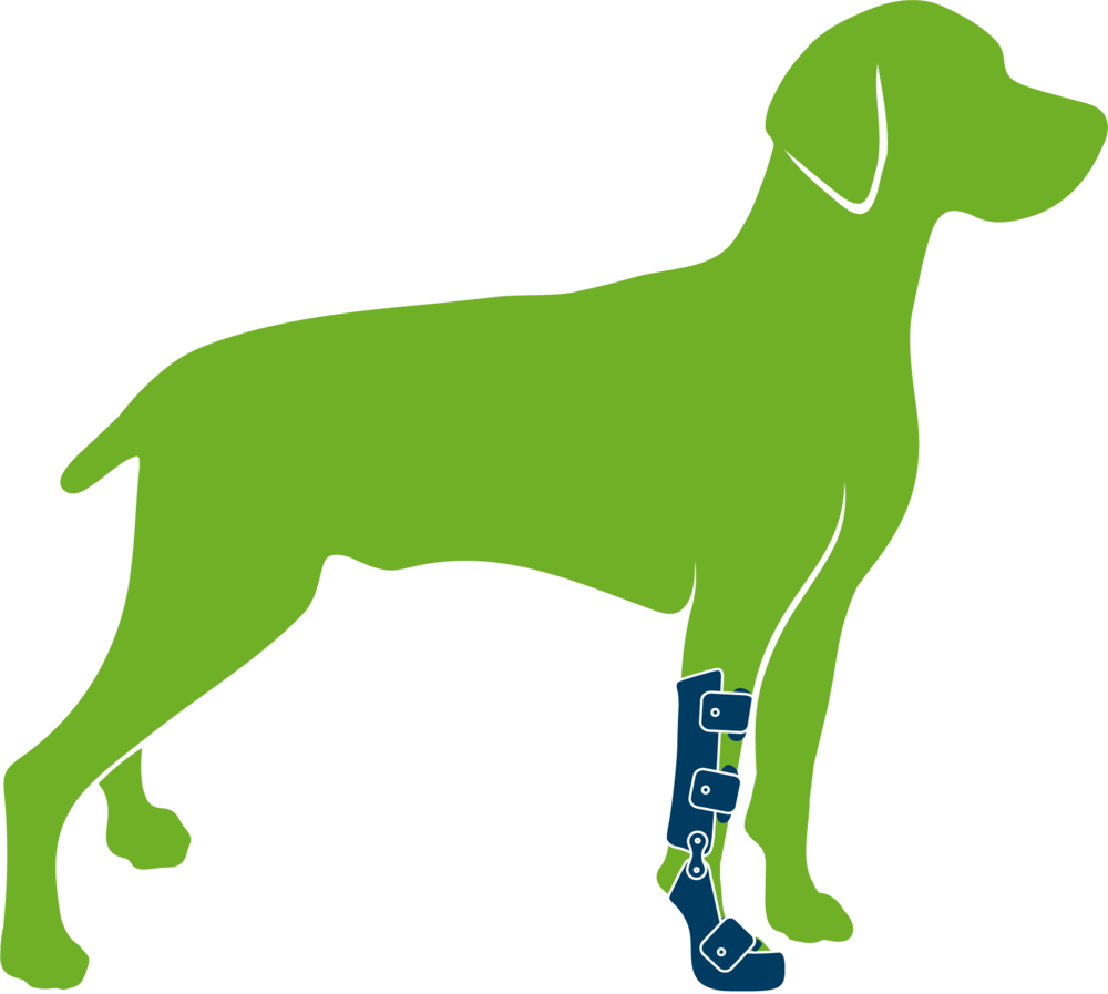Dog wearing custom supracarpal orthosis