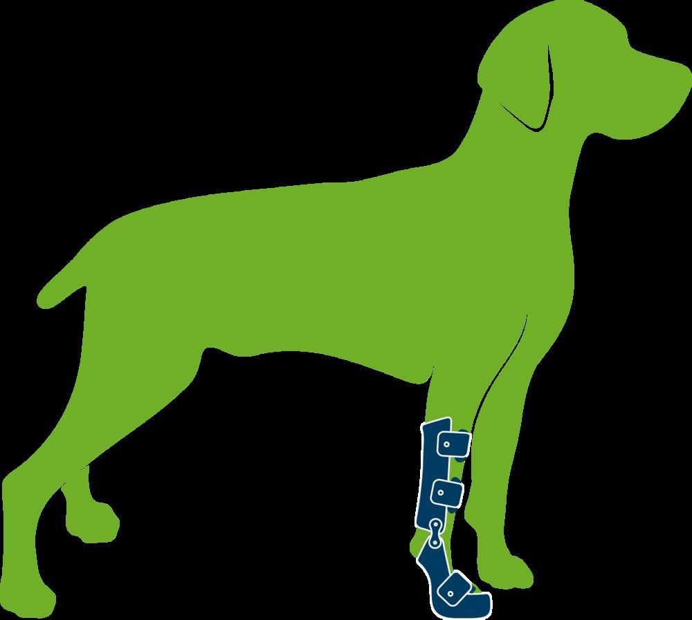 Dog wearing custom supracarpal orthosis