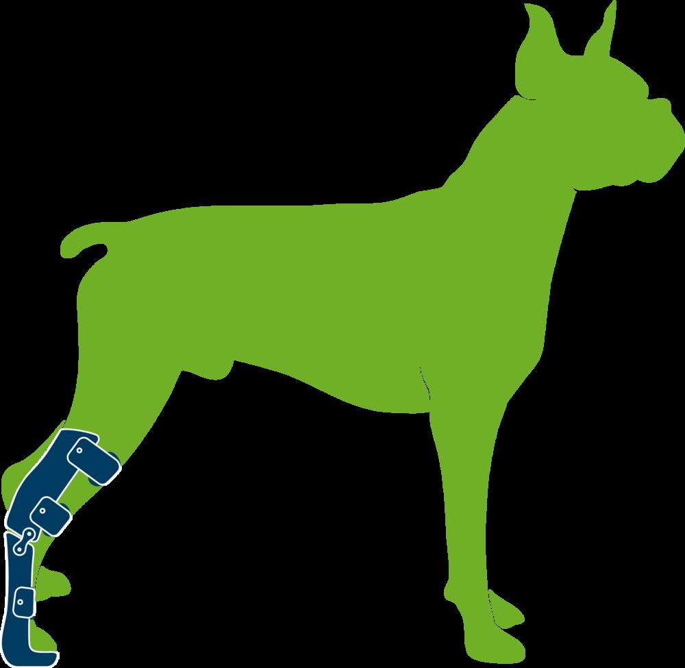 Dog wearing custom hock orthosis