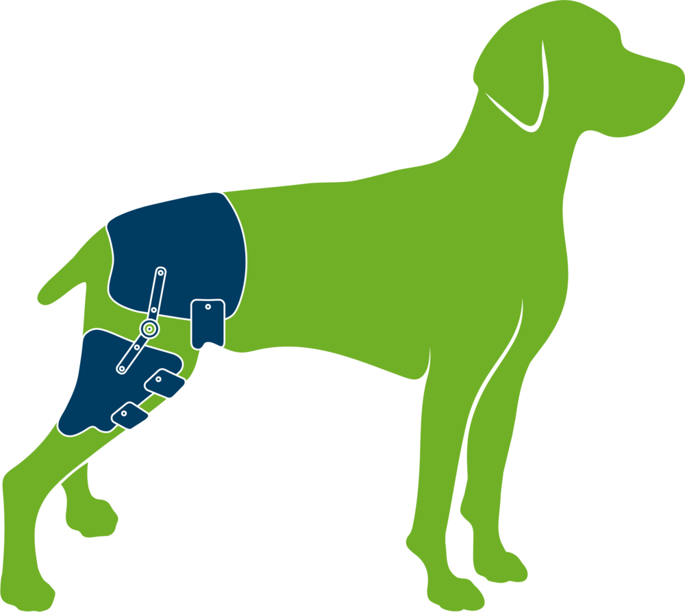 Dog with custom hip orthosis
