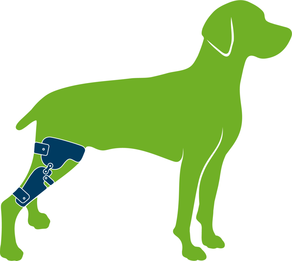 Dog wearing custom knee brace (stifle orthosis)