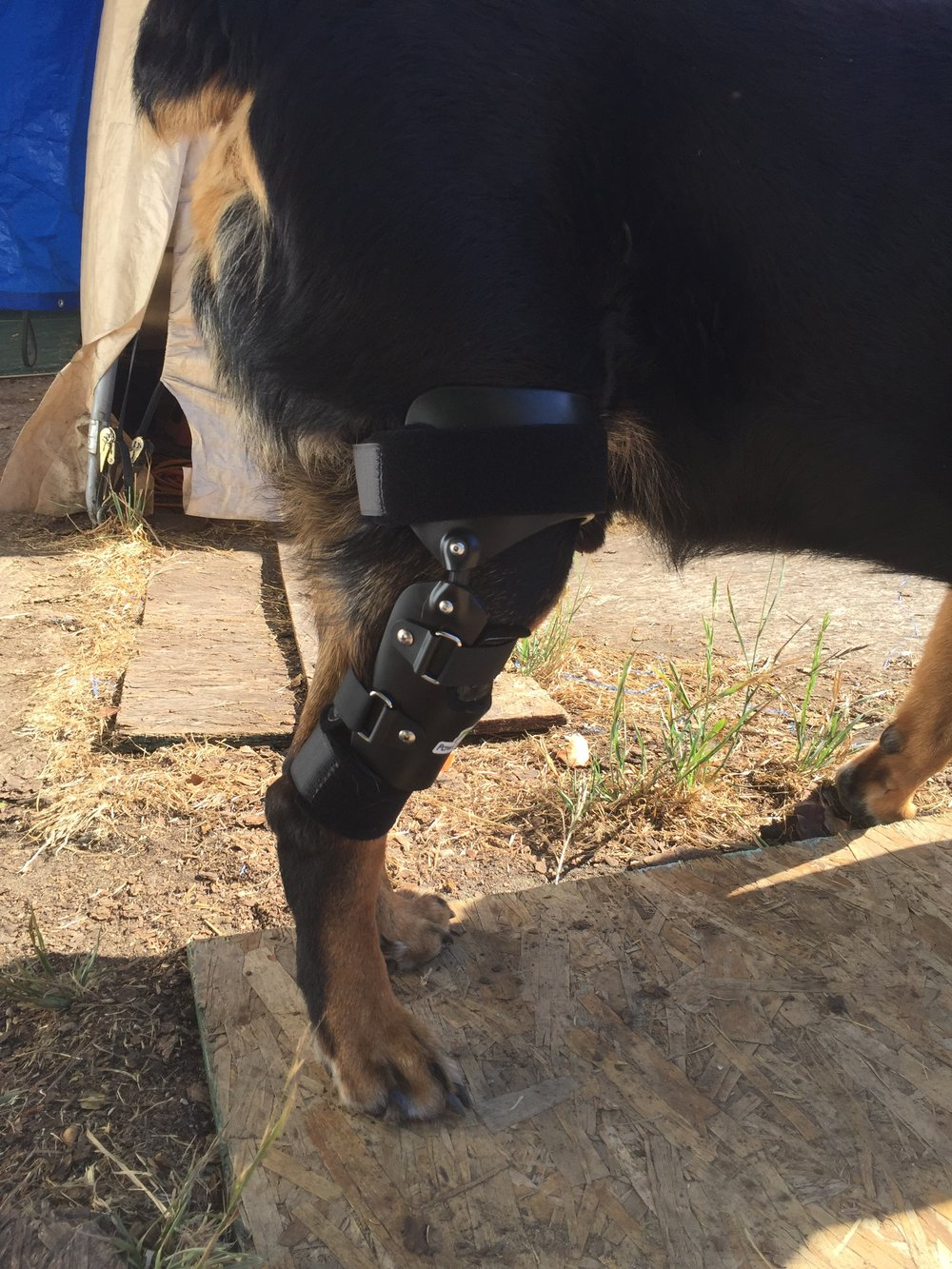 Dog Canine CCL ACL Knee Brace