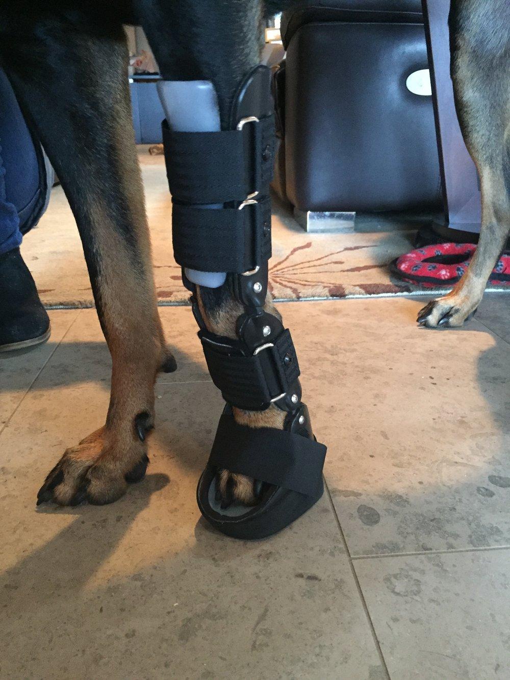 Canine Dog Wrist Carpus Brace