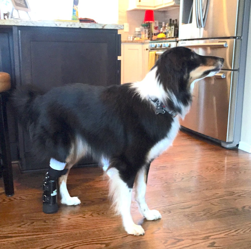 Canine Metatarsal Level Prosthesis