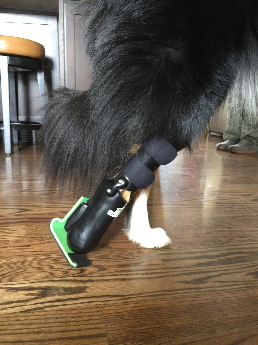 Canine Metatarsal Level Prosthesis w/ 3D Printed Foot
