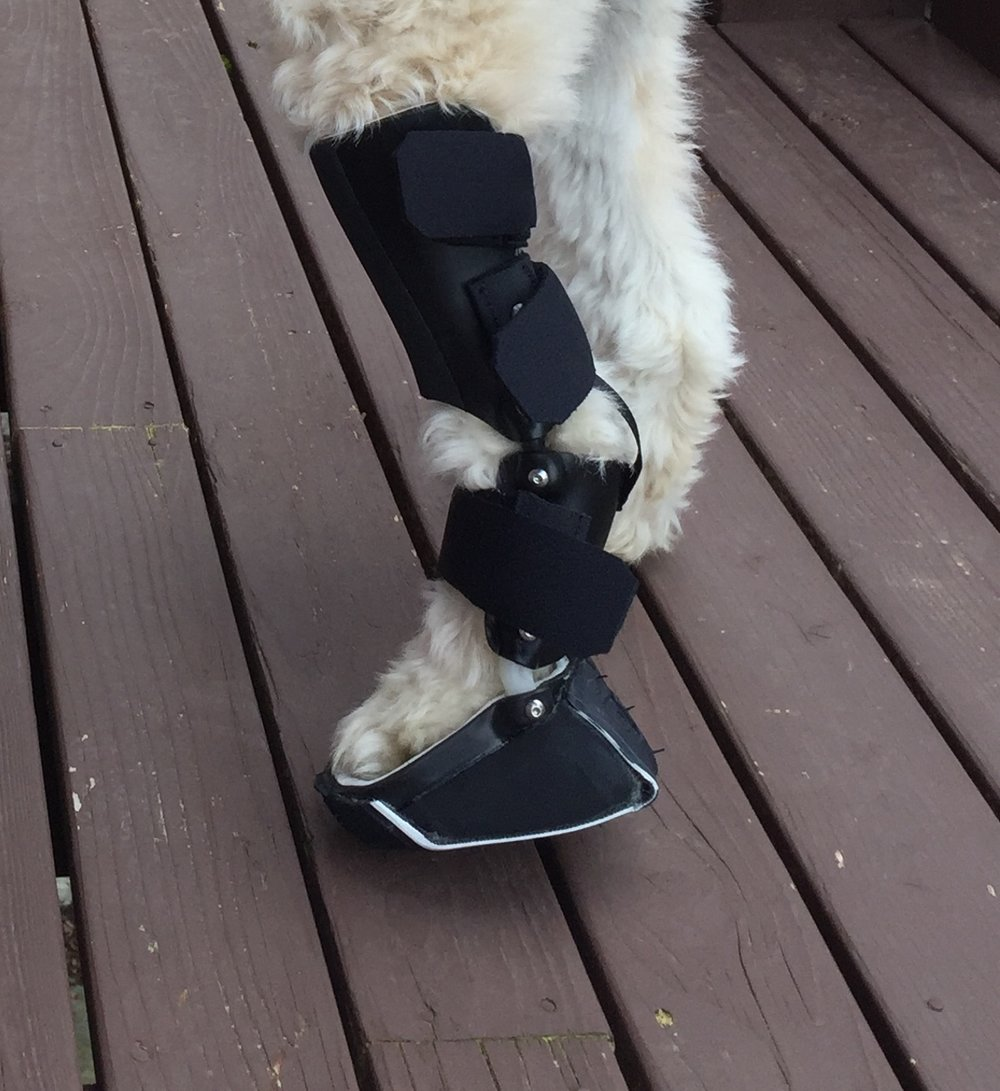Custom Tarsal Paw Orthosis Brace Achilles Injury