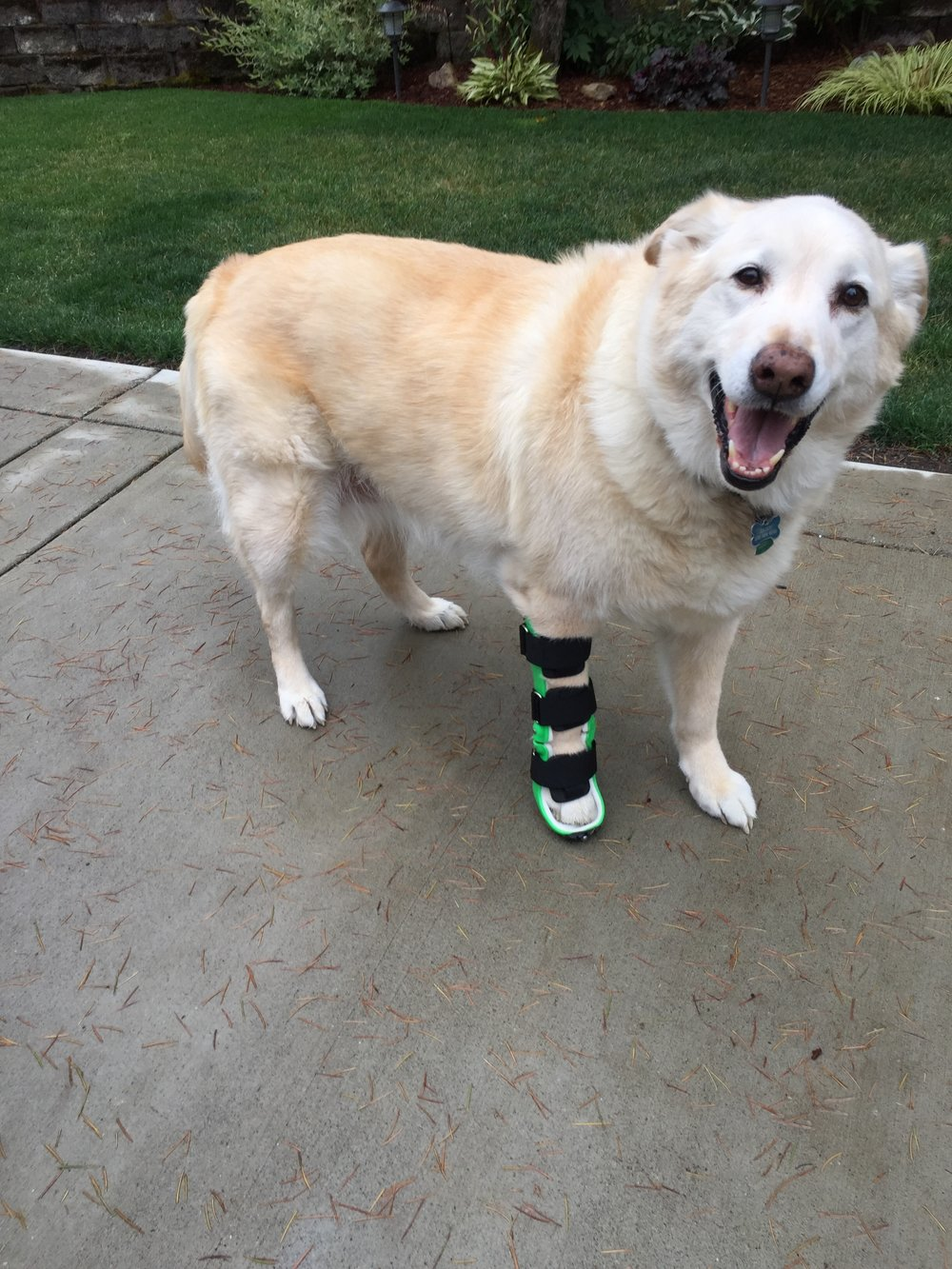 Custom Canine Carpal Hyperextension Brace