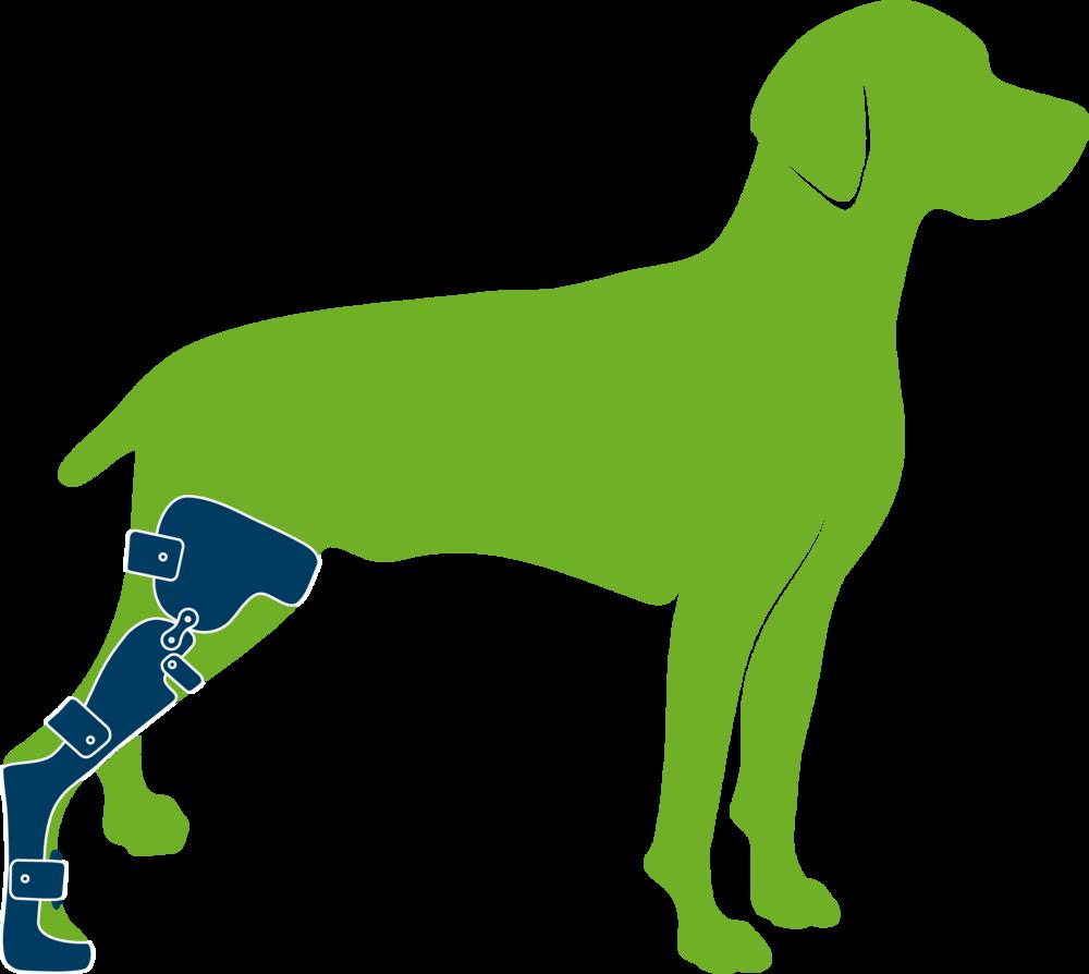 Dog Stifle Tarsus Paw Brace