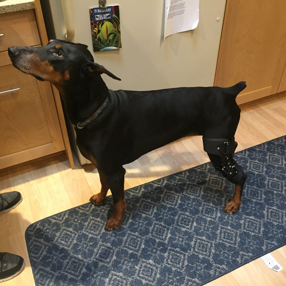 Dog Knee / CCL Brace