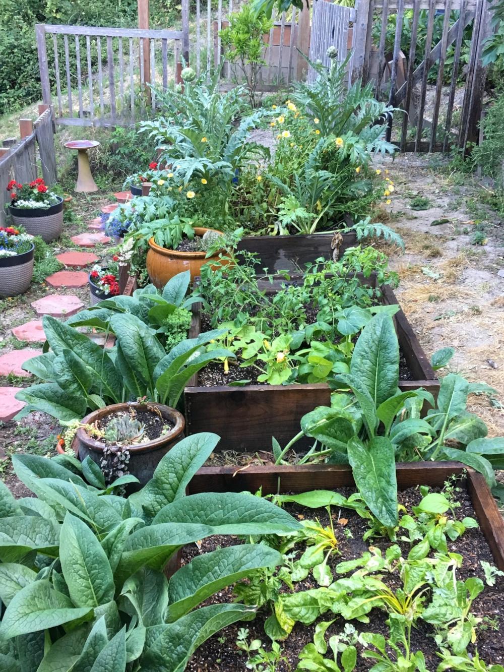My Summer Garden