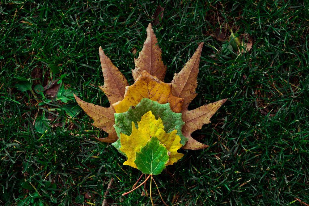 autumn-autumn-leaves-fall-699831.jpg