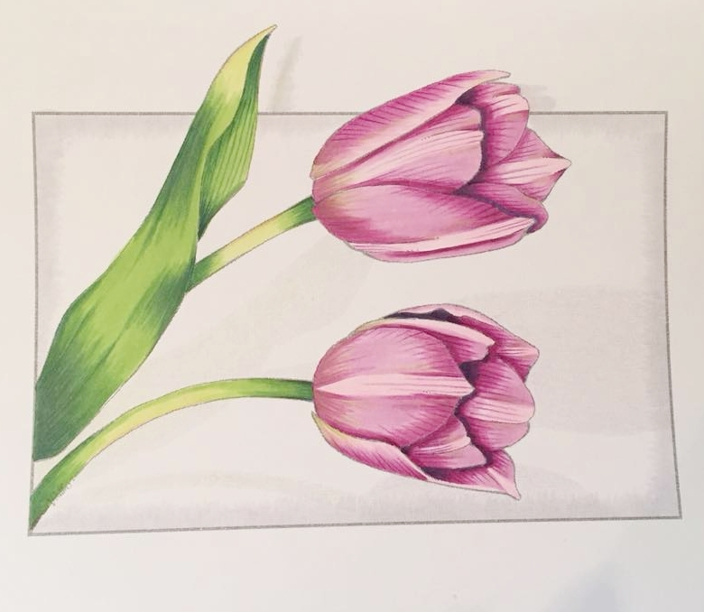 Cathy Tulips.jpg