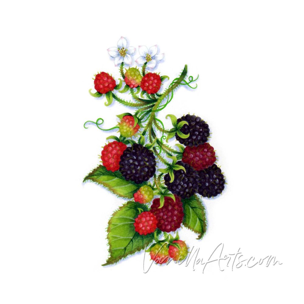 August 2018 - Blackberry Bramble (Berry It!)