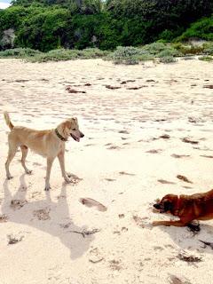 Jackson & Barley on the beach