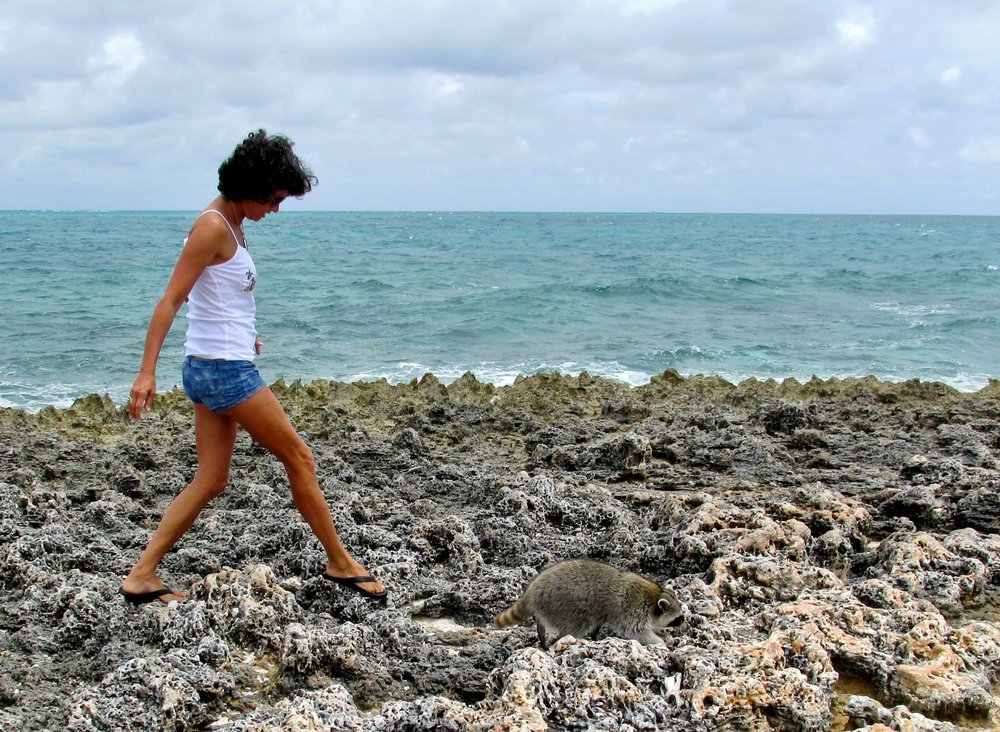 Carefully navigating the limestone shoreline, with raccoon leading the way