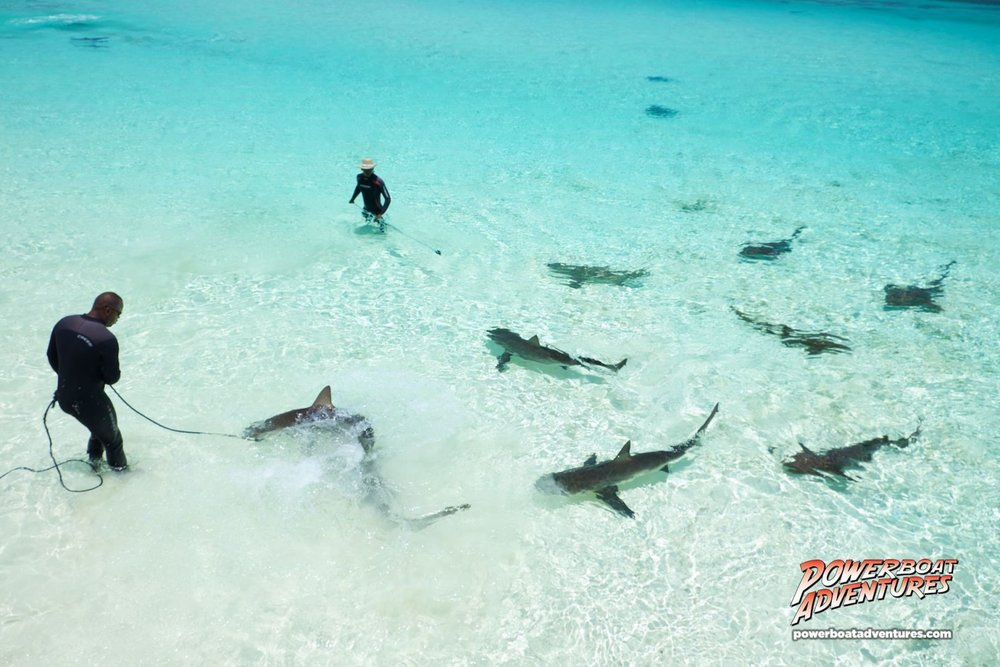 An aerial shot of shark wrangling. Photo Credit: Powerboat Adventures