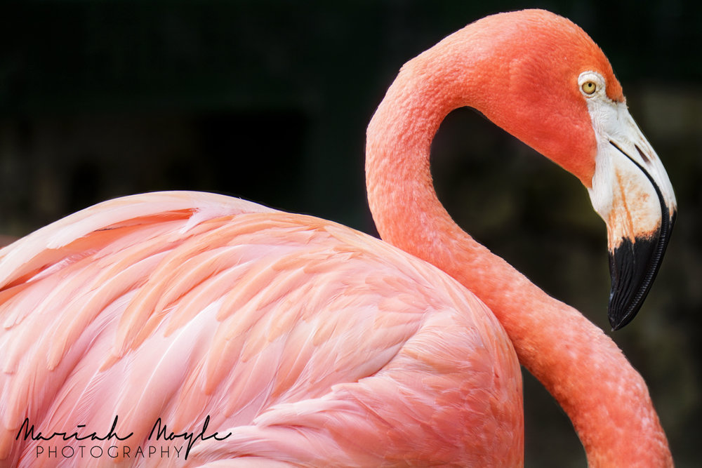 flamingo (2).jpg