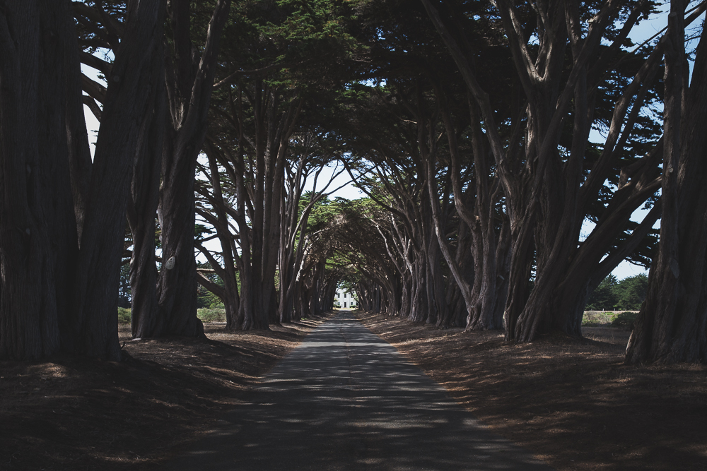 At the end of the Cypress Tree Tunnel stands the KPH radio station, which played an important role in maritime communications for ships on the Pacific Ocean through the late 1900s.
