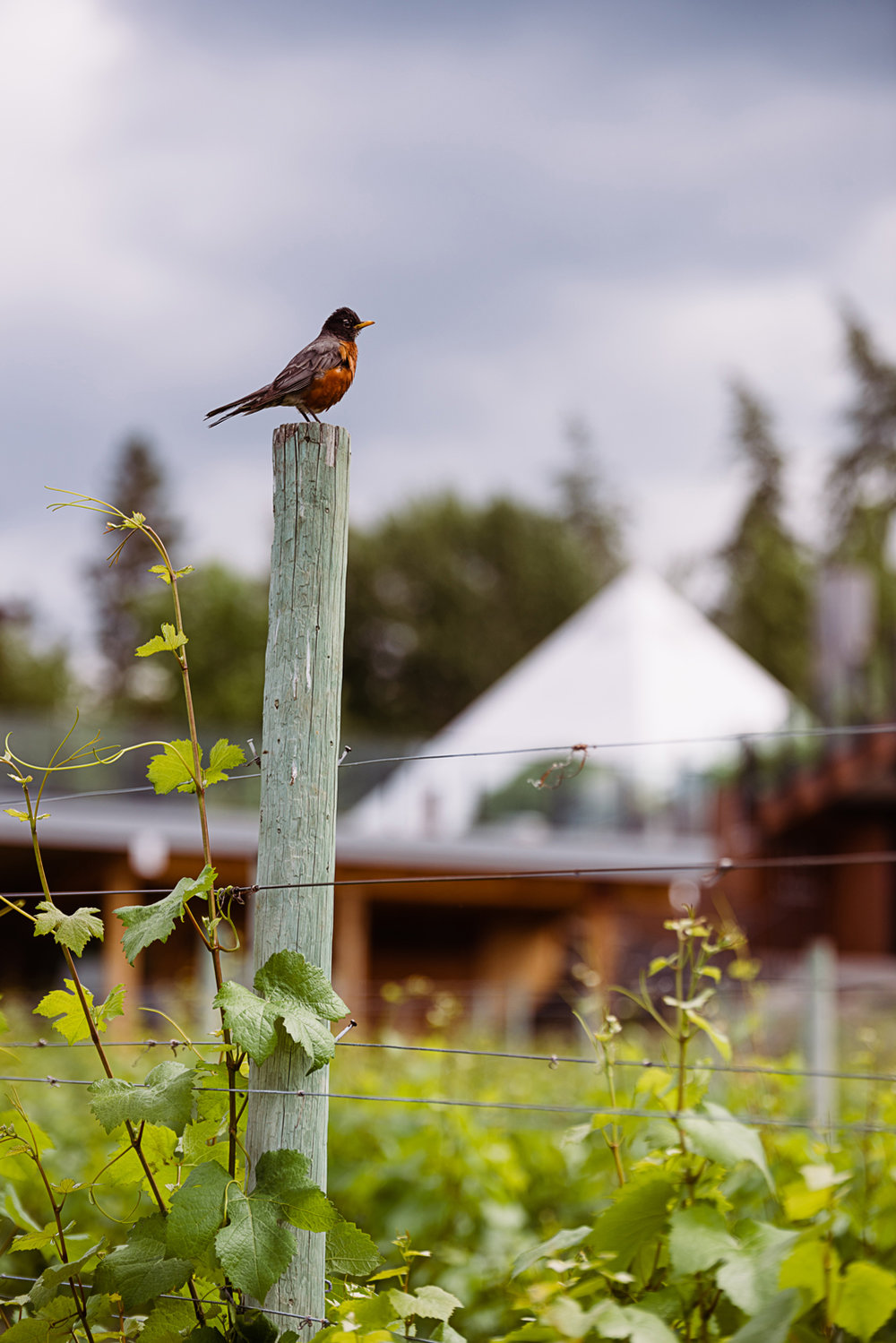 Summerhill Alive Packaging - birds