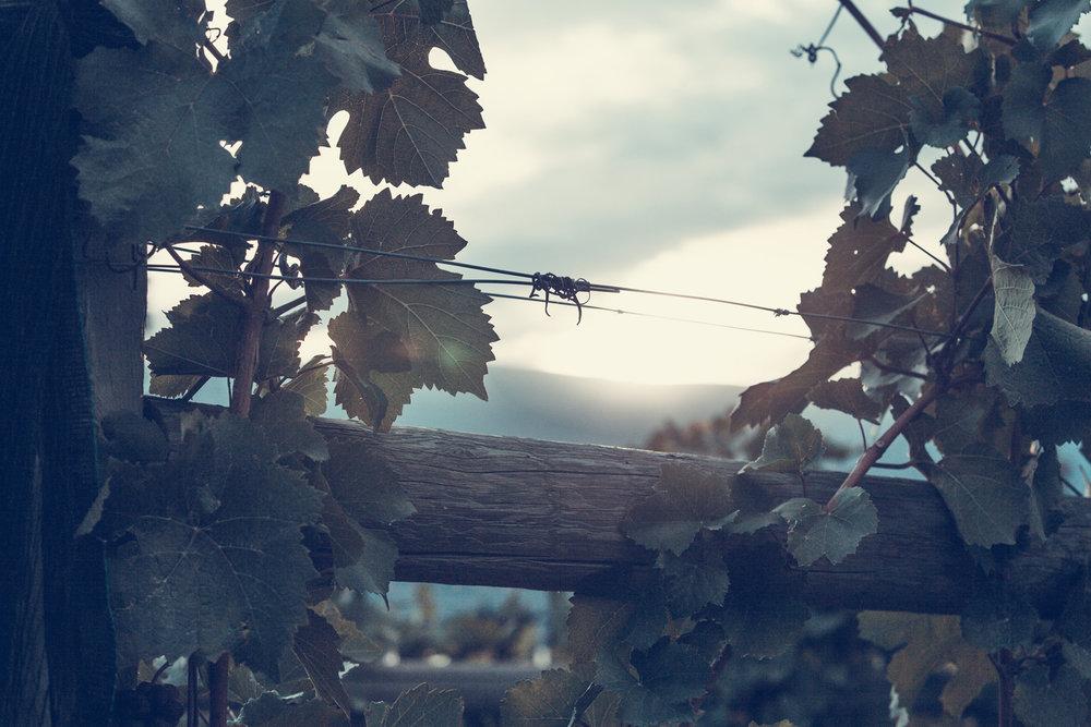 haywire-wine-branding-wire-vines.jpg
