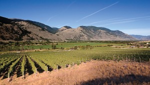 Mount Boucherie's beautiful South Okanagan Vineyards