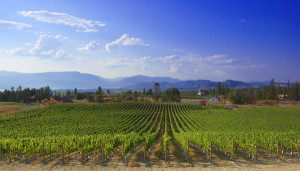 SpierHead Winery's Gentleman Farmer Vineyard