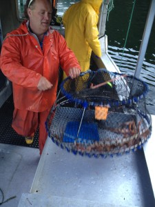 Traps with Spot Prawns and other by-catch are emptied onto a custom-built table