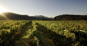 One of the beautiful family-owned Mt Boucherie Vineyards, located in the Okanagan Valley
