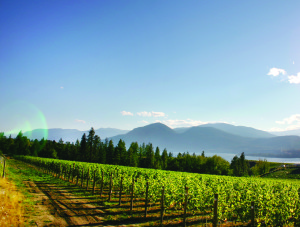 Serendipity Winery's Naramata Vineyard, with Okanagan Lake in the background Credit-Johann Wessels