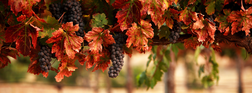 FaceBookCover-Grapes