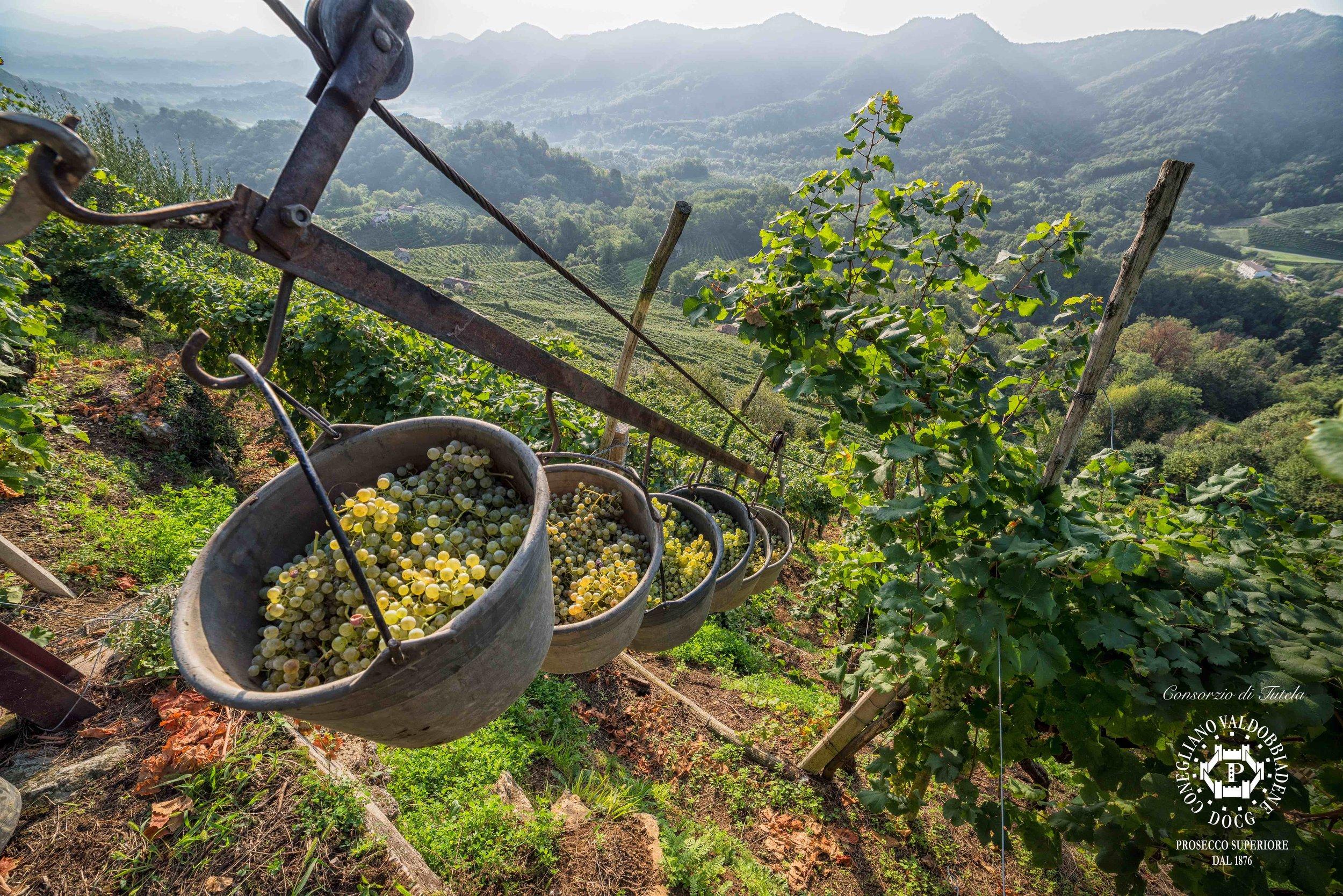 smallphoto credits_Consorzio di Tutela del Vino Conegliano Valdobbiadene, foto di Arcangelo Piai