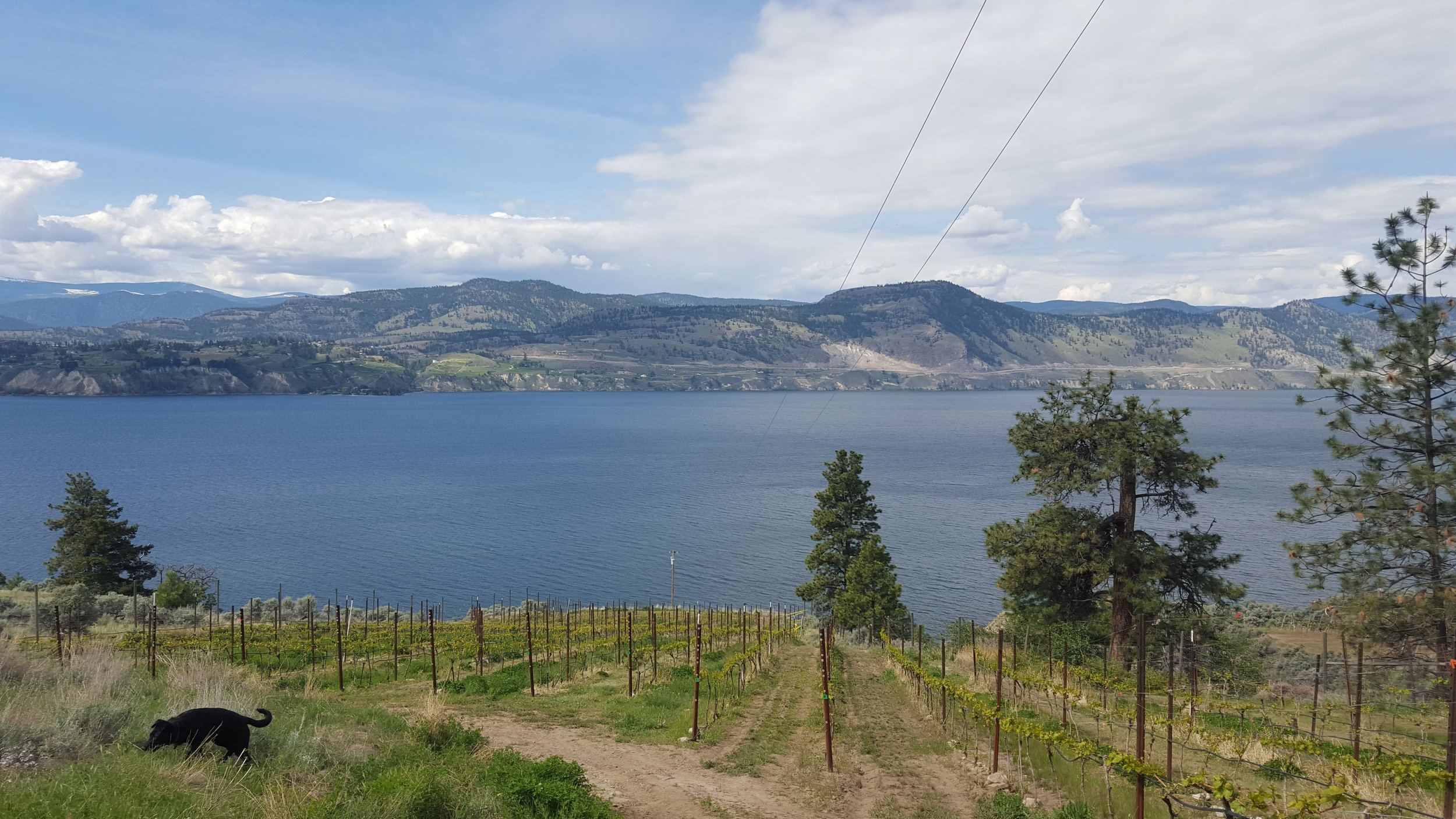 Overlooking Summerland from across Okanagan Lake