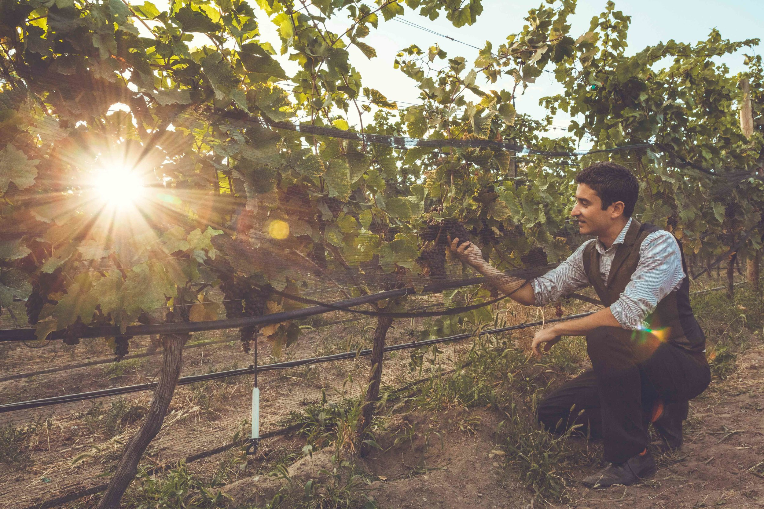 smallOKCrushPadsept2015-Mike West kneeling in Switchback Vineyard-credit Taryn Liv Parker